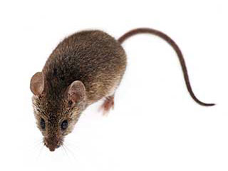 Rodent Proofing Services | Attic Cleaning Orange, CA